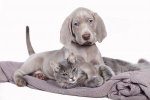 Ernährungsplan für Welpen / Kitten