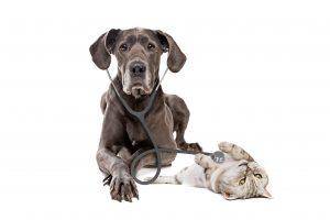 Ernährungsplan für erkrankte Hunde / Katzen
