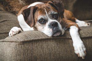 Ernährungsplan für ältere Hunde/ Katzen