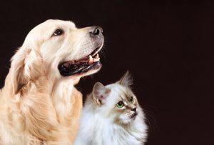 Ernährungsplan für erwachsene Hunde/ Katzen