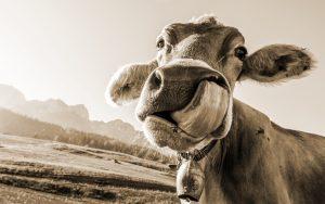 Read more about the article Bio-Fleisch! Was steckt eigentlich dahinter?